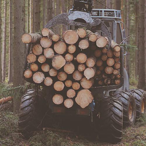 timbers_img
